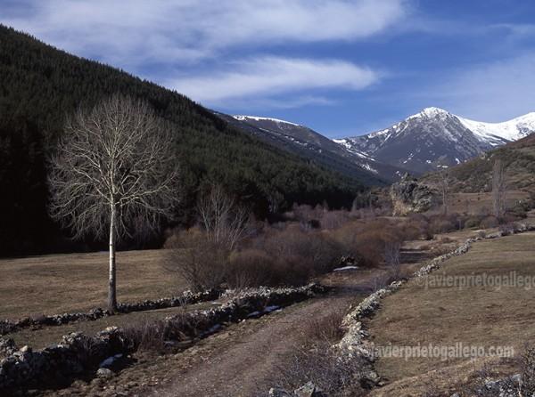 Una pista forestal de la Montaña Palentina. Palencia. Castilla y León. España. © Javier Prieto Gallego