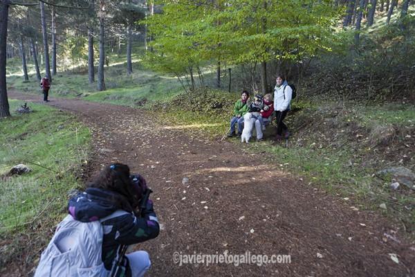 Un grupo de senderistas se hace un foto en el interior del Pinar de Hoyocasero. Localidad de Hoyocasero. Sierra de Gredos. Ávila. Castilla y León. España. © Javier Prieto Gallego