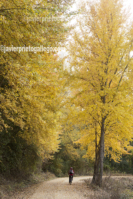 Sirga del Canal en otoño entre Calahorra de Ribas y el puente de Valdemudo. Canal del Castilla. Palencia. Castilla y León. España. © Javier Prieto Gallego