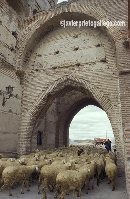 Una de las puertas de la muralla de Madrigal de las Altas Torres. Ávila. Castilla y León. España. © Javier Prieto Gallego