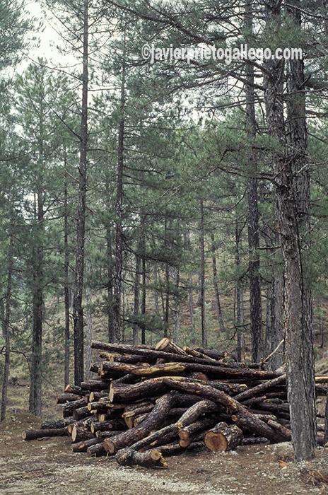 Bosque de pinos en el parque natural de las Sierras de Cazorla, Segura y Las Villas. Jaén. Andalucía. España ©Javier Prieto Gallego