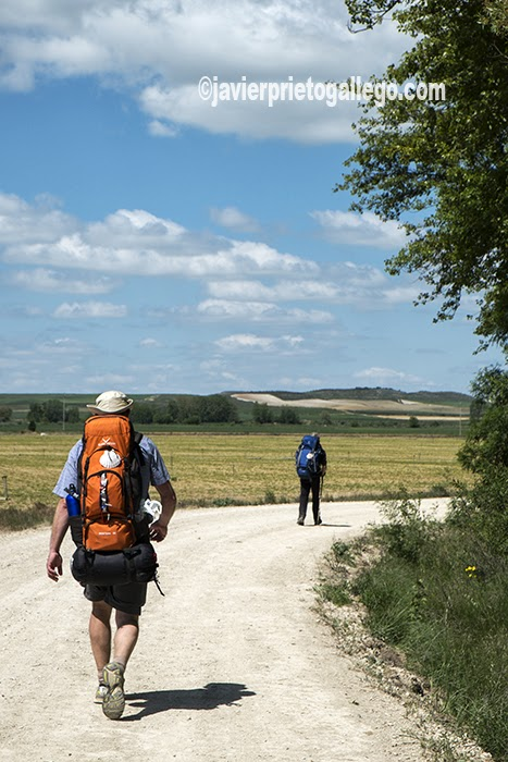 Peregrinos en el Camino de Santiago. Palencia. Castilla y León. España. © Javier Prieto Gallego