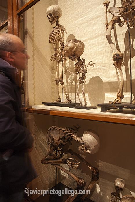 Museo de la Universidad. Universiteitsmuseum. Ofrece un recorrido por la evolución de la educación desde el establecimiento de la Universidad en 1636. Utrecht. Holanda. © Javier Prieto Gallego