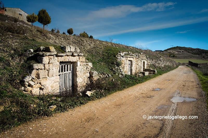 Bodegas en el camino que corre junto al arroyo de Valderrey. Antigüedad. Cerrato Castellano. Palencia. Castilla y León. España © Javier Prieto Gallego