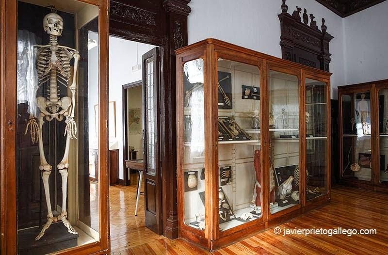 Museo de Ciencias Naturales. Valladolid. Castilla y León. España, 2008 © Javier Prieto Gallego