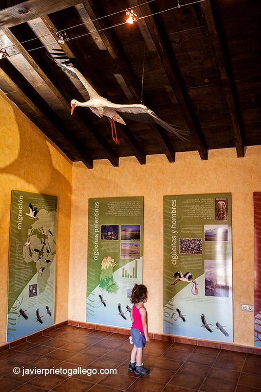 Una niña visita el centro de Intepretación de la Cigüeña Blanca. Localidad de Barrio de Santa María. Montaña Palentina. Palencia. Castilla y León. España © Javier Prieto Gallego