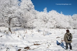 Bosque nevado en Higón (Burgos)