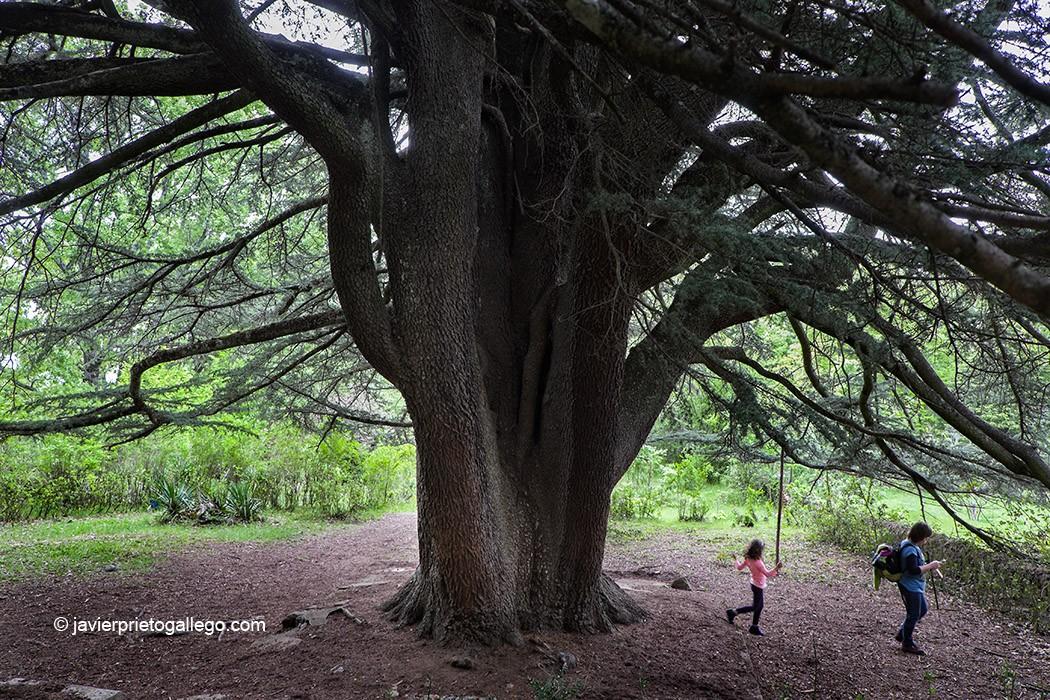 Árboles centenarios en Béjar