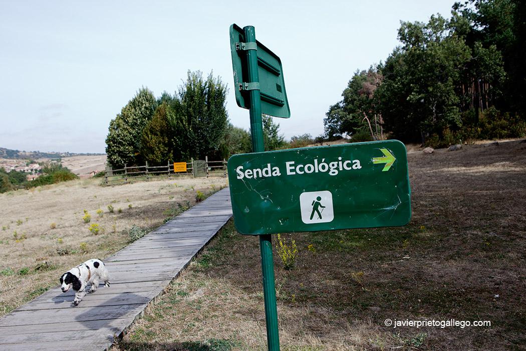 Frente al CENEAM se localiza el arranque de una Senda Ecológica que recorre el entorno del centro. Valsaín. Segovia. Castilla y León. España © Javier Prieto Gallego;