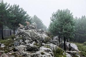 Centro del Lobo Ibérico de Castilla y León (Robledo, Zamora)