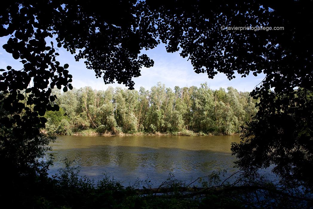Río Duero. Sendero de la ribera norte de Toro. Zamora. Castilla y León. España. © Javier Prieto Gallego