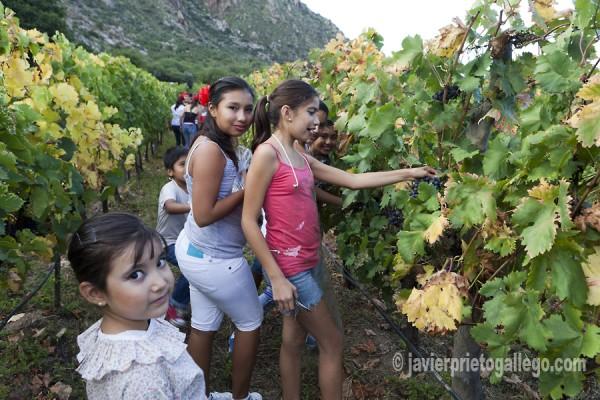 Los niños participan en la fiesta de la vendimia de una bodega de Cafayate.