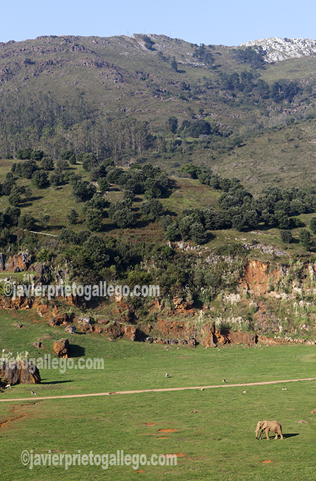 Elefantes africanos. Parque de la Naturaleza de Cabárceno. Cantabria. España © Javier Prieto Gallego