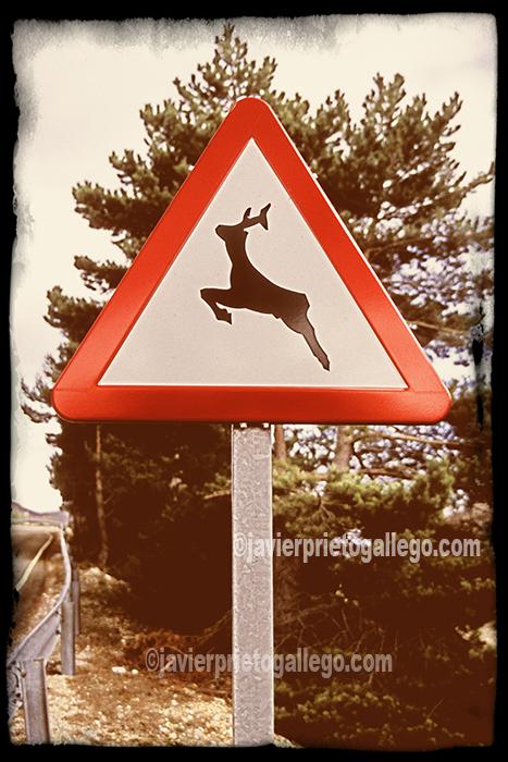 Señal que alerta del peligro de fauna silvestre en una carretera de la Montaña Palentina. Palencia. Castilla y León. España. © Javier Prieto Gallego