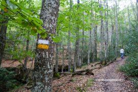 Marcas del sendero del Monte Hijedo PR- BU 30 en un rincón del bosque. Localidad de Santa Gadea de Alfoz. Burgos. Castilla y León. España. © Javier Prieto Gallego