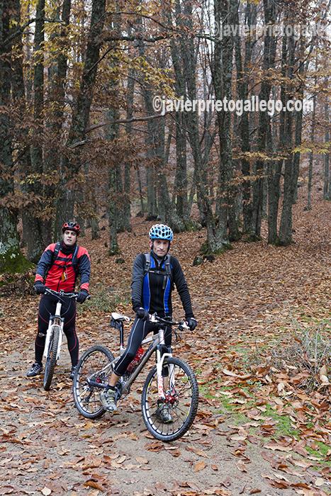Dos ciclistas hacen un recorrido por el interior de el Castañar de El Tiemblo. Ávila. Castilla y León. España. © Javier Prieto Gallego