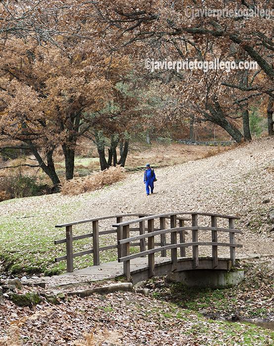 Puente sobre el arroyo de la Yedra, que recorre el interior del Castañar de El Tiemblo. Ávila. Castilla y León. España. © Javier Prieto Gallego