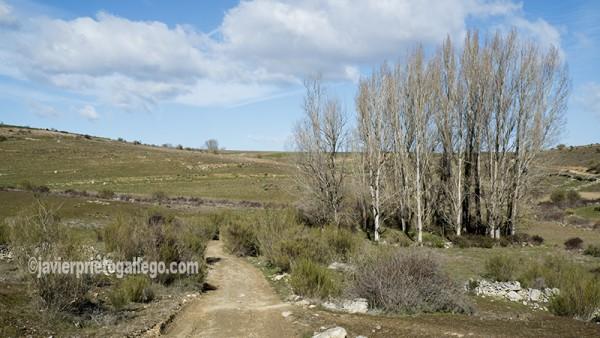 Camino hacia Las Pilas. Almaraz de Duero. Zamora. Castilla y León. España. ©Javier Prieto Gallego