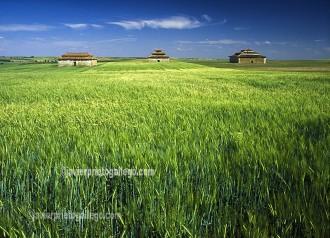 Palomares. Tierra de Campos. Provincia de Valladolid. Castilla y León. España. ©Javier Prieto Gallego