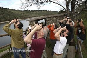 Aficionados a la ornitología en el Mirador de Portilla del Tiétar. Observación de aves. Monfragüe. Cáceres. Extremadura. España. © Javier Prieto Gallego