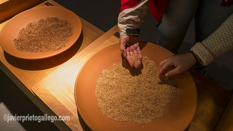 Dos visitantes comprueban el tacto de los diferentes cereales. Recursos expositivos del Museo del Pan dedicados a mostrar los distintos tipos de cereal. Mayorga. Valladolid. Castilla y León. España. ©Javier Prieto Gallego