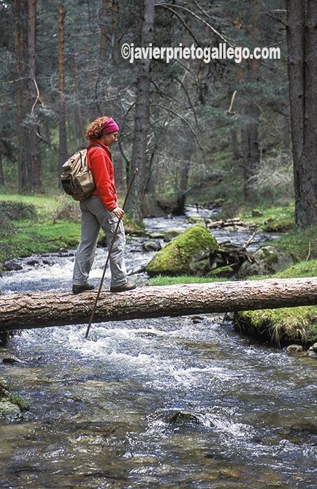 Una senderista atraviesa un río en el camino hacia el Pinar de la Acebeda, en las laderas septentrionales de la Sierra de Guadarrama. Segovia. Castilla y León. España © Javier Prieto Gallego