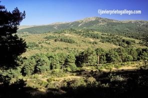 Paisaje de la Sierra de Guadarrama. Segovia. Castilla y León. España. © Javier Prieto Gallego