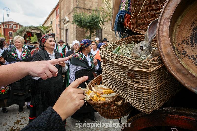 Conejo vivo. Detalle de un carro. Concurso y desfile tradicional de carros engalanados que se realiza durante las fiestas de San Froilán. Pza Santo martino. León. España.