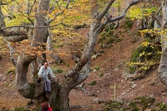 Haya conocida como Fagus en el interior del hayedo de Ciñera de Gordón. Se le calcula unos 500 años de edad. Montaña Leonesa. Reserva de la Biosfera declarada por la Unesco en 2005. León. Castilla y León. España © Javier Prieto Gallego