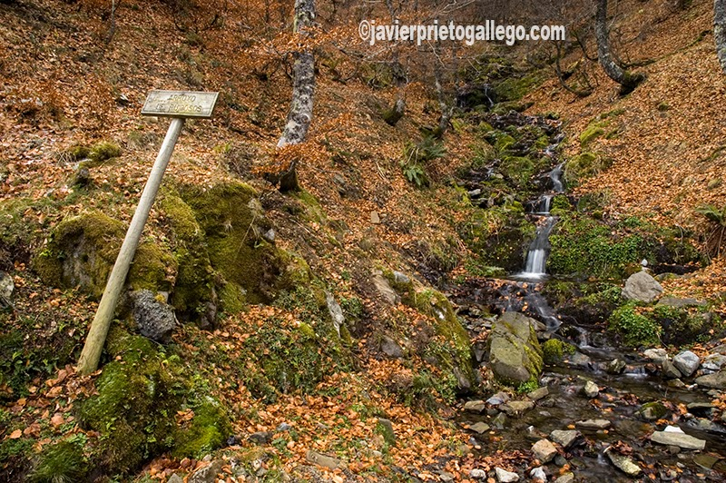 Arroyo de Ruidosos. Ruta de la Cervatina. Parque Regional de Picos de Europa. Puebla de Lillo. León. Castilla y León. España. © Javier Prieto Gallego