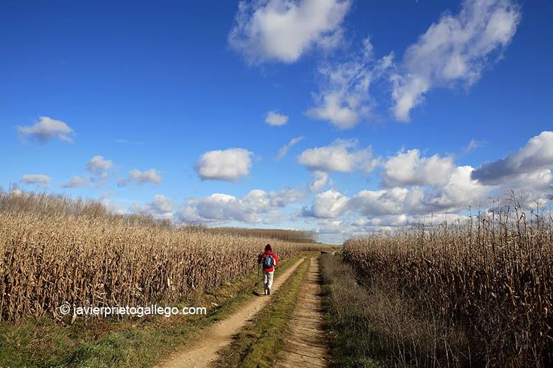 Peregrino en la ribera del río Tera. Camino de Santiago Sanabrés. Santa Marta de Tera. Zamora. Castilla y León. España. © Javier Prieto Gallego