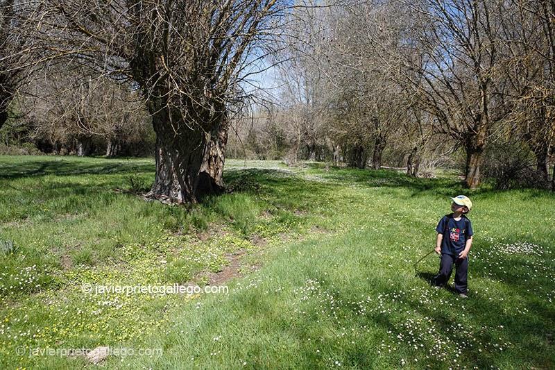 Un niño recorre la hoces del río Pirón cerca de Turégano. Segovia. Castilla y León. España.