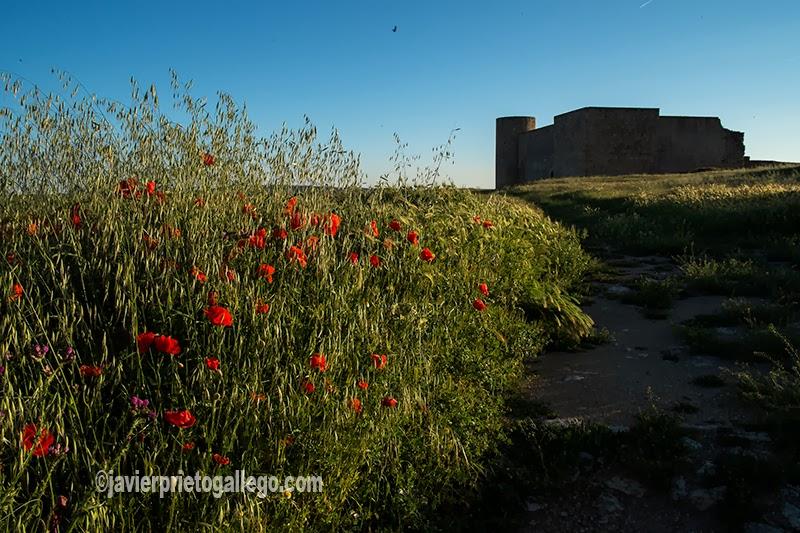 Castillo de Medinaceli. Soria. Castilla y León. España. © Javier Prieto Gallego