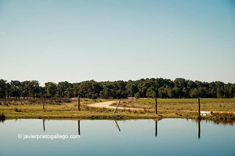 Laguna China en el espacio natural de las Lagunas de Cantalejo. Segovia. Castilla y León. España © Javier Prieto Gallego