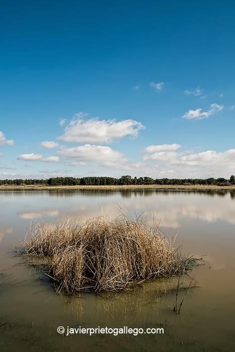 Laguna de Navalayegua en el Espacio natural de las Lagunas de Cantalejo. Segovia. Castilla y León. España © Javier Prieto Gallego