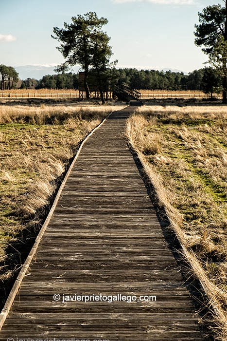 Pasarela de madera que conduce al observatorio de la laguna de Navahornos. Espacio natural de las Lagunas de Cantalejo. Segovia. Castilla y León. España © Javier Prieto Gallego