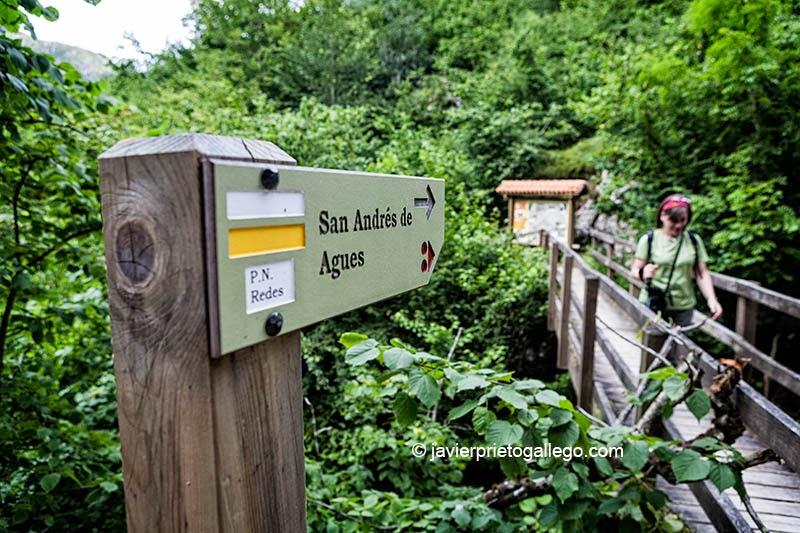 Ruta del Alba. En el parque natural de Redes. Asturias. España. © Javier Prieto Gallego