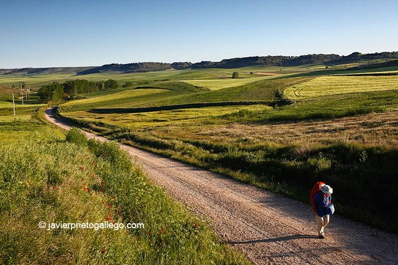 Una peregrina discurre en solitario por el Camino a Santiago de Madrid en un tramo cercano a Ciguñuela. [Foto: Valladolid. Castilla y León. España, 2010 © Javier Prieto Gallego].