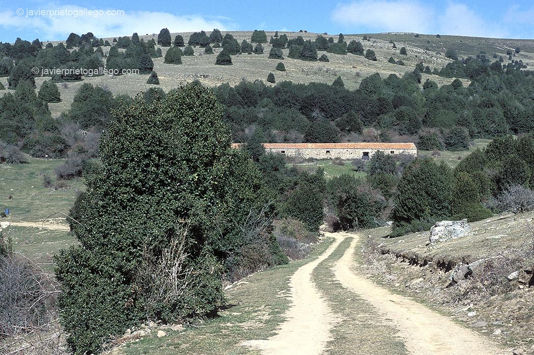 Camino de acceso al interior del acebal de Garagüeta. Soria. Castilla y León. España, 2004 © Javier Prieto Gallego