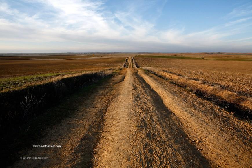 Camino entre  Fontihoyuelo y Santervás de Campos. Camino de Santiago desde Madrid. Provincia de Valladolid. Comarca de Tierra de Campos. Castilla y León. España. © Javier Prieto Gallego