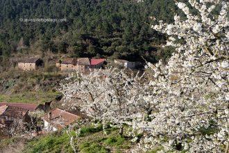 Cerezos en flor en la localidad de Hozabejas. Valle de Las Caderechas. La Bureba. Burgos. Castilla y León. España. © Javier Prieto Gallego