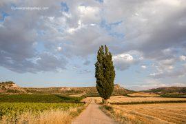 Campos en agosto. Ribera del Duero. Roturas. Valladolid. Castilla y León. España © Javier Prieto Gallego;