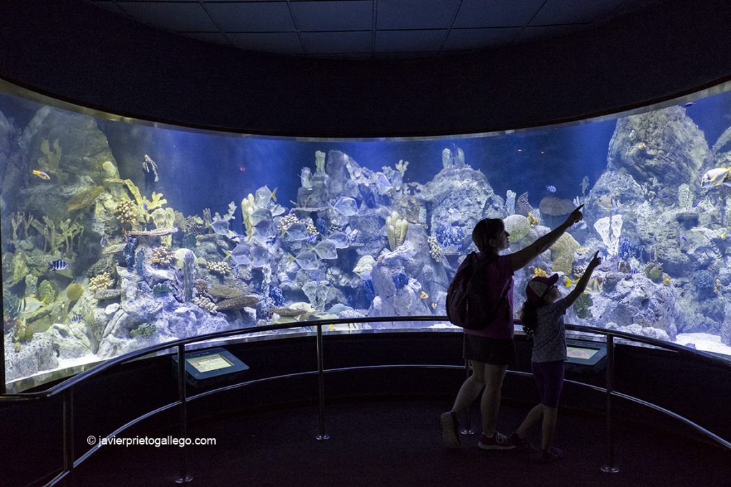 Instalaciones del acuario. Loro Parque.Tenerife. Islas Canarias. España © Javier Prieto Gallego