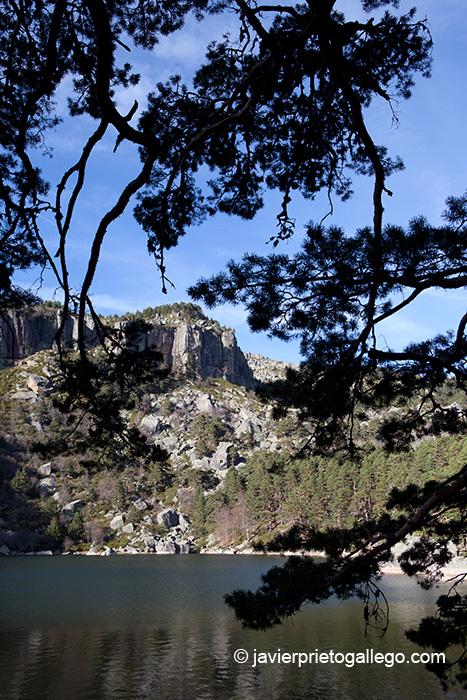 La Laguna Negra vista entre las ramas de un pino silvestre desde una de sus orillas. Espacio Natural Laguna Negra y Circos Glaciares de Urbión. Soria. Castilla y León. España. © Javier Prieto Gallego