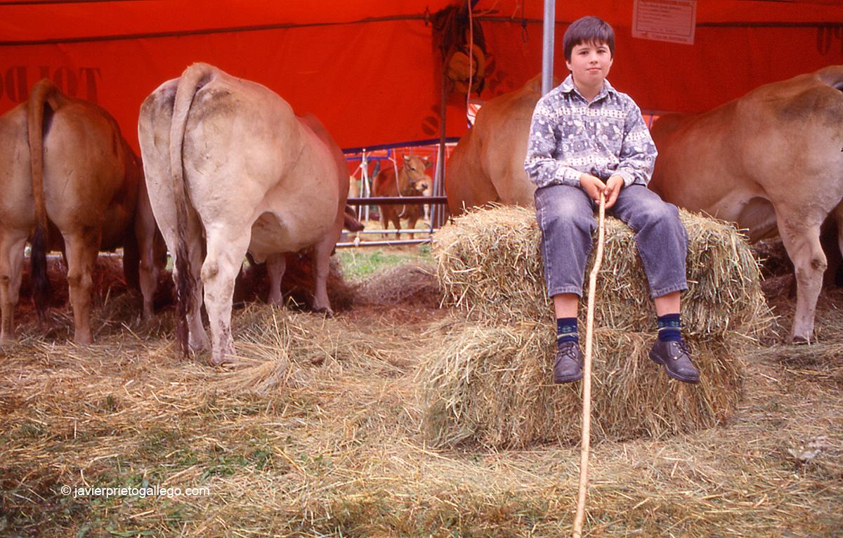 Feria de ganado en Pola de Somiedo. Asturias. España. © Javier Prieto Gallego