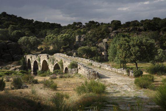 Dehesa de Las Aldehuelas. Puente Mocho. Cerca de Ledesma. Salamanca. Castilla y León. España. © Javier Prieto Gallego