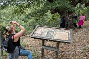 Cómo hacer el paseo «Ruta de las Minas» (Sabero / León)